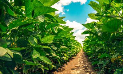 culturi de legume in timpul verii